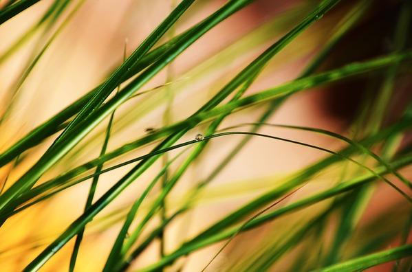 grass-4219937_960_720
