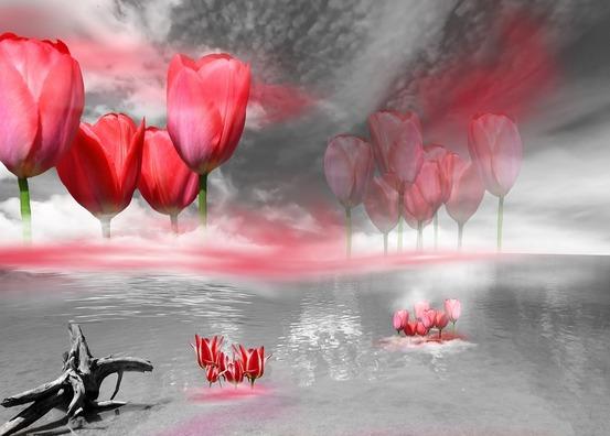 tulips-1270748_960_720