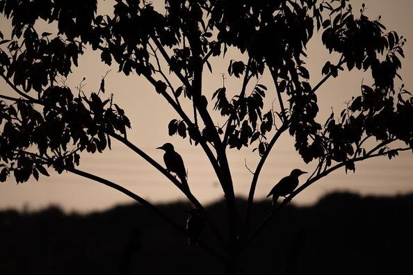birds-4395443_960_720