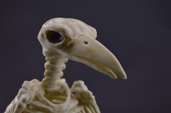 crow-4573131_960_720