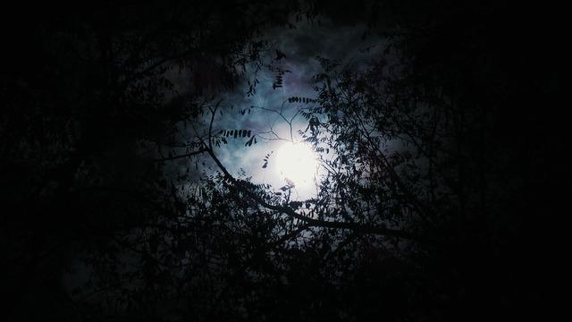 trees-2589399_960_720