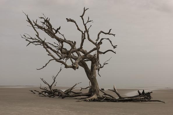 tree-3137482_960_720
