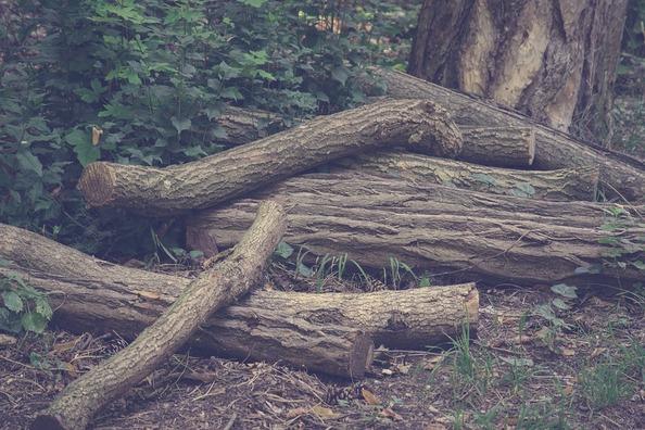 wood-3577395_960_720