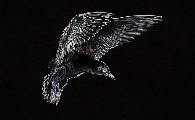 seagull-670649_960_720