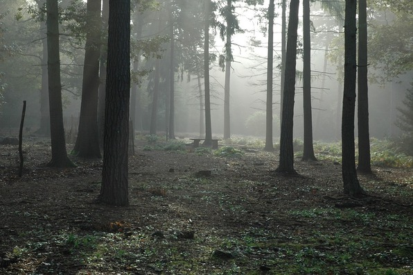 forest-194483_960_720
