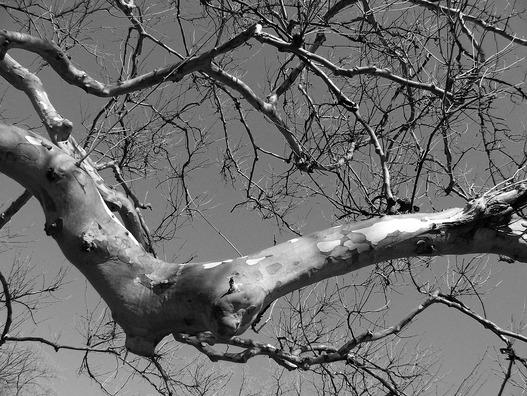 branch-17923_960_720
