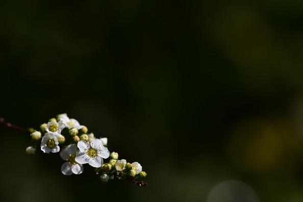 flowers-4142706_960_720