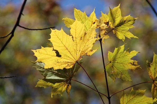 fall-4602204_960_720