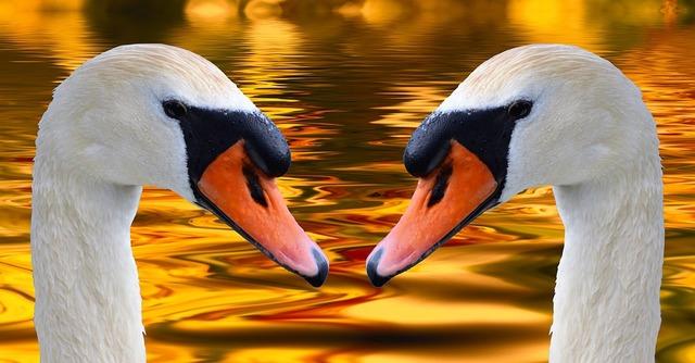 swans-2496842_960_720
