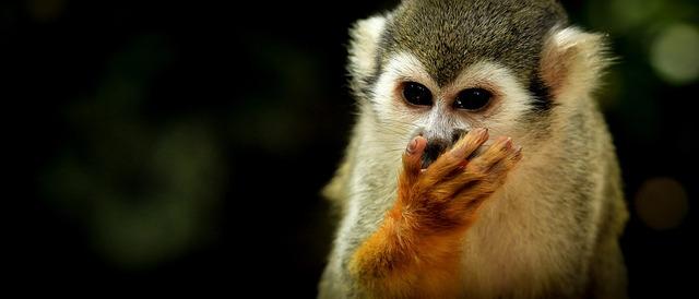 monkey-2571994_960_720