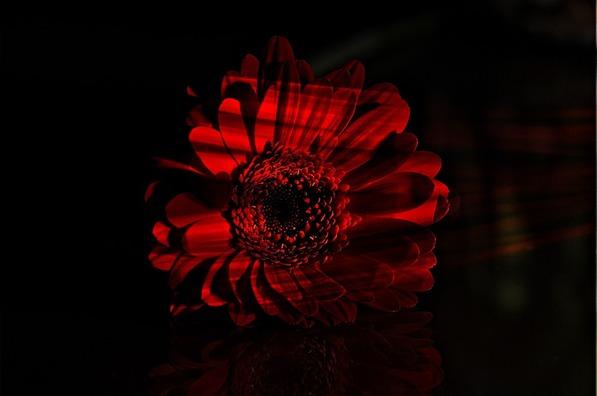 flower-701172_960_720