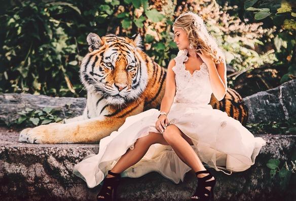 tiger-3688753_960_720