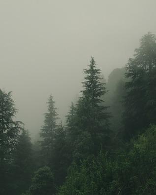 trees-5182932_960_720