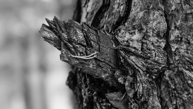 tree-1699013_960_720