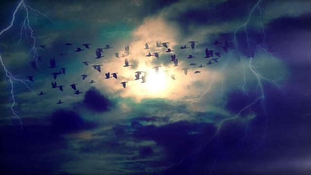 birds-384954_960_720