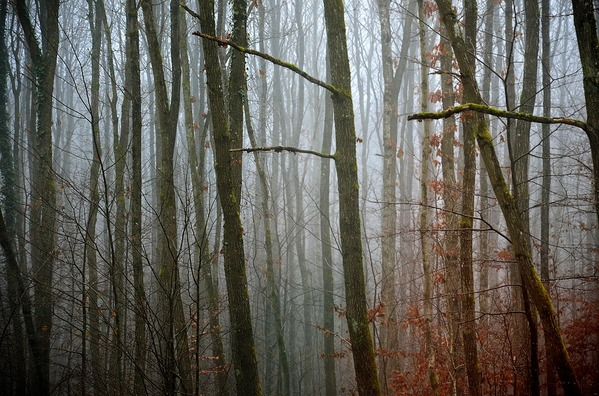 forest-4742678_960_720