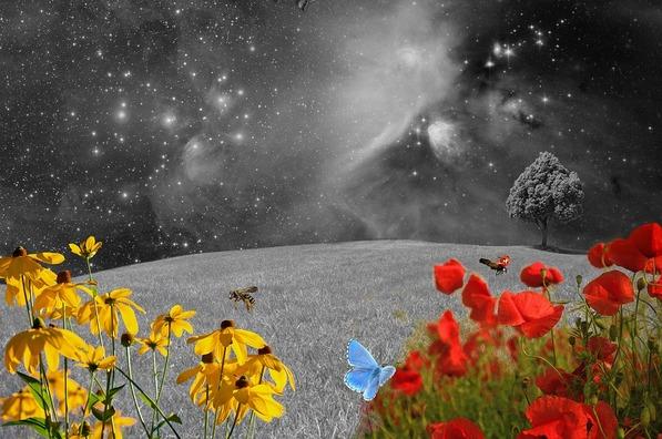 meadow-2401893_960_720