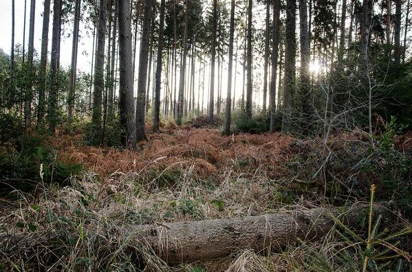 trees-4020054_960_720