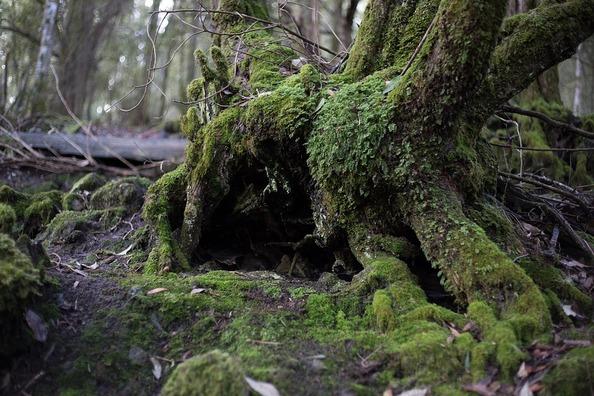 tree-1566215_960_720