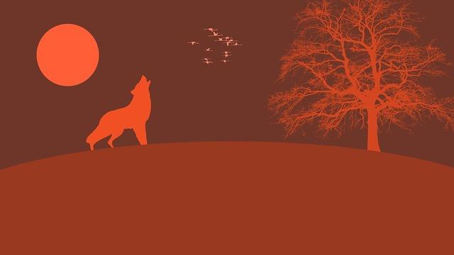 wolf-4364626_960_720