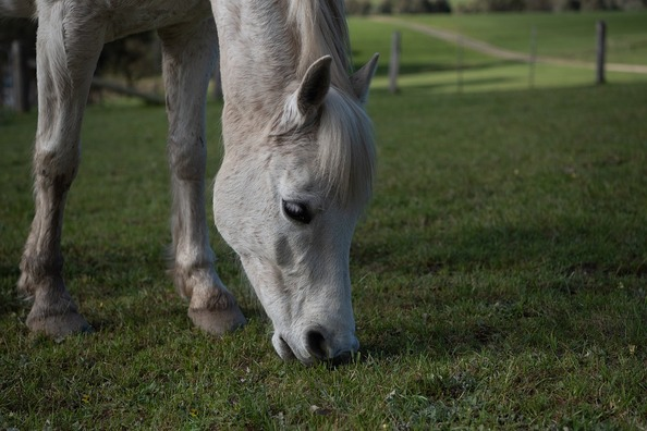 horse-4512673_960_720