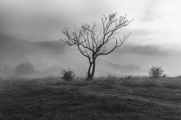 tree-4125694_960_720