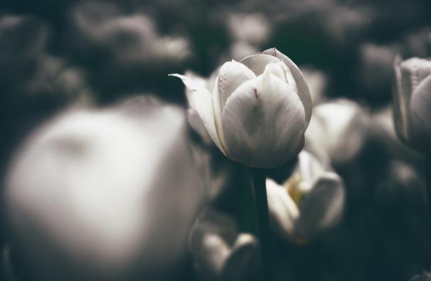 flower-2594375_960_720