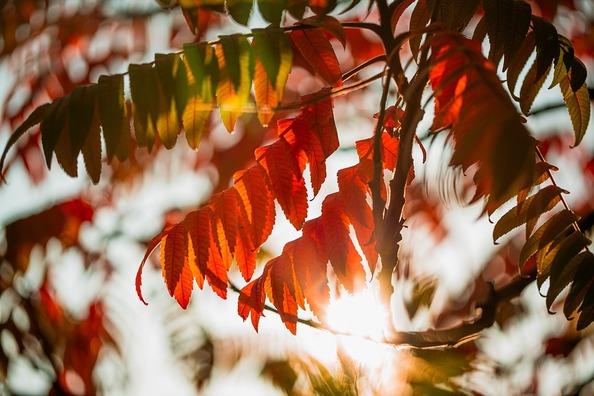 foliage-4539105_960_720