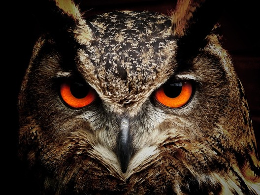 owl-50267_960_720