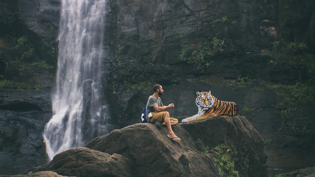 tiger-3158635_960_720
