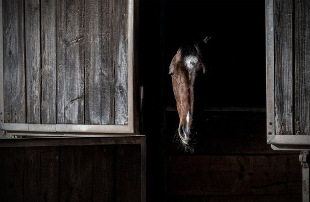 horse-2219364_960_720