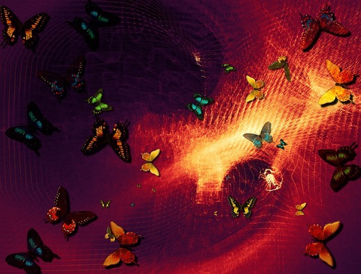 butterflies-2346162_960_720