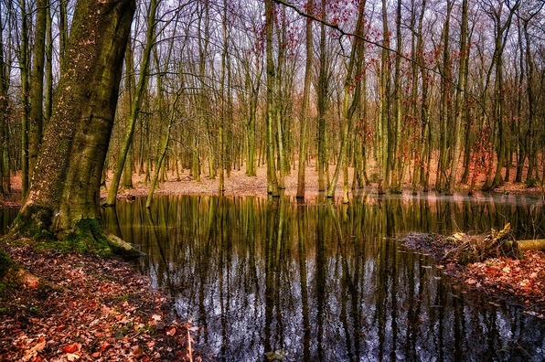 forest-4010050_960_720