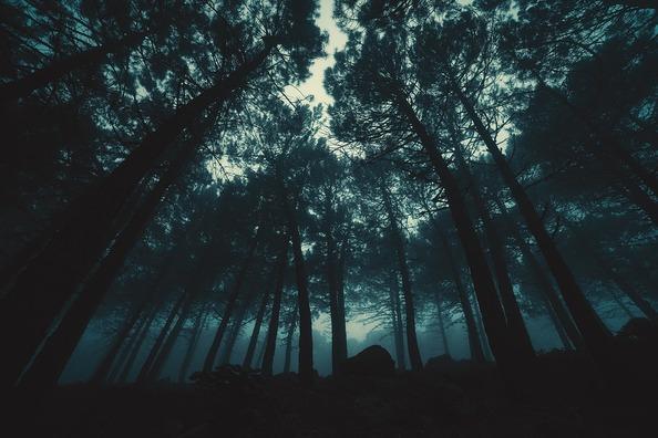 fog-3601704_960_720