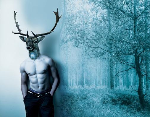 deer-3789127_960_720