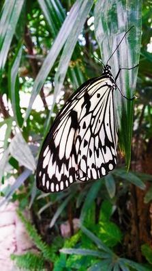 butterfly-3623965_960_720