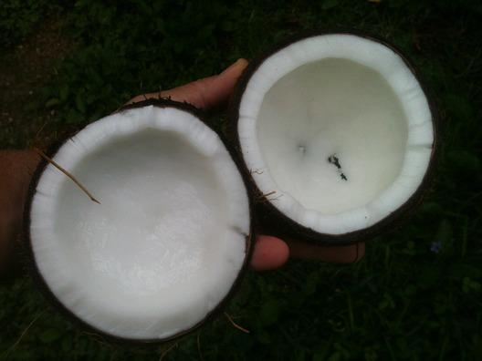 coconut-648105_960_720