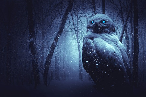 owl-2227574_960_720
