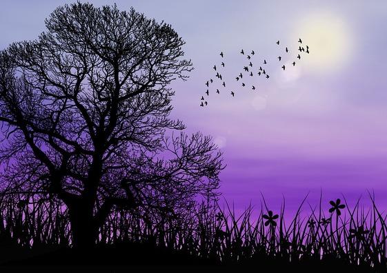 sunset-4562567_960_720