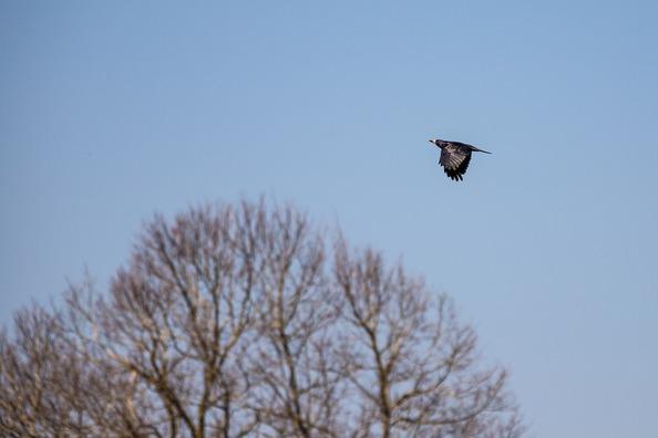 crow-5034749_960_720
