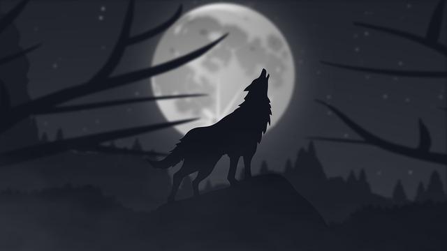 wolf-3895598_960_720