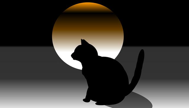 cat-3578723_960_720
