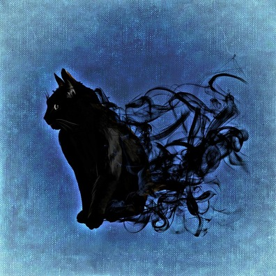 cat-988232_960_720