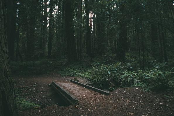 nature-841424_960_720