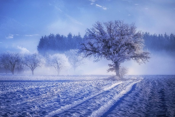 tree-3000379_960_720