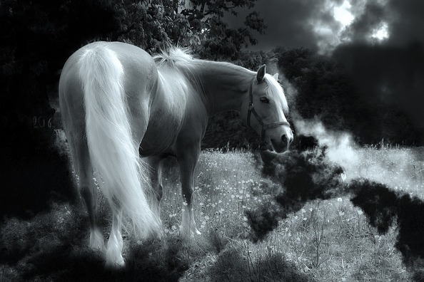 horse-449212_960_720