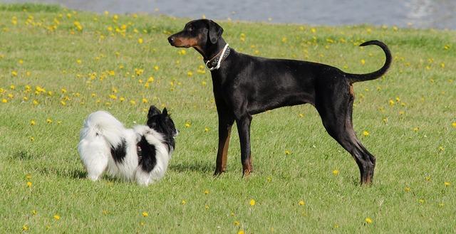 dog-dogs-pet-3616977_960_720