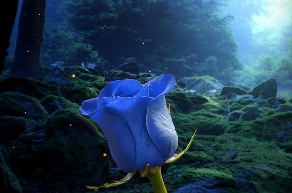 flower-3928276_960_720