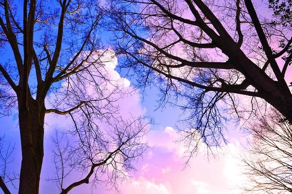 tree-3156567_960_720