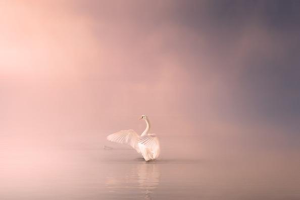 swan-4170400_960_720
